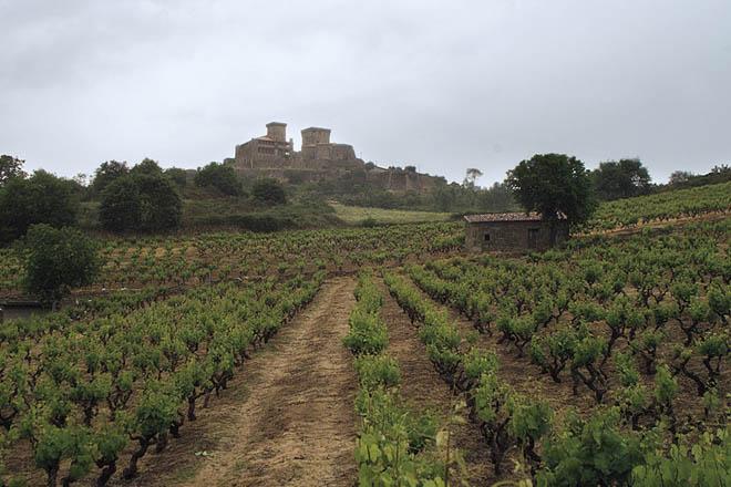 Viñedos da adega Pazo das Tapias, co castelo de Monterrei ao fondo.