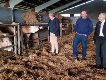 A Deputación de Lugo destina 380.000 euros a apoiar aos criadores de Rubia Galega