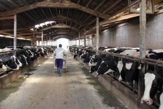 Behi Alde, así se está digitalizando con 'Uniform-Repro' la mayor ganadería del País Vasco