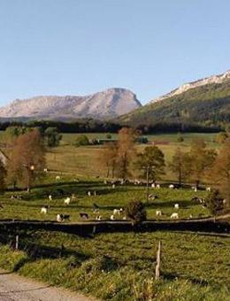 Vacas de Behi Alde en los pastos.