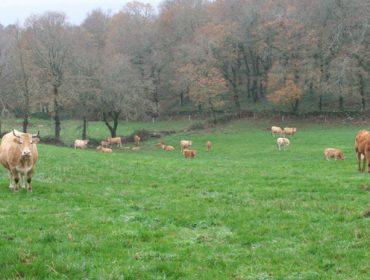 A Xunta repartirá estes días 24 millóns de euros da PAC 2019 a 20.000 agricultores e gandeiros