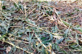 Una ganadería de Taboada denuncia pérdidas de 400.000 euros en 10 años a causa del jabalí