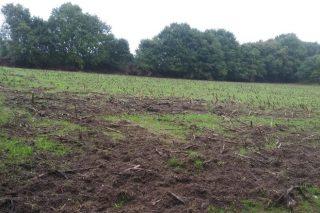 Agromuralla insiste en la necesidad de afrontar los daños causados por el jabalí