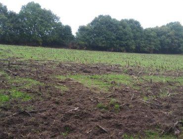Agromuralla insiste na necesidade de afrontar os danos causados polo xabarín