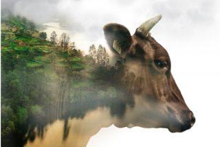 La sostenibilidad y los retos del sector lácteo, a debate en Lugo en septiembre