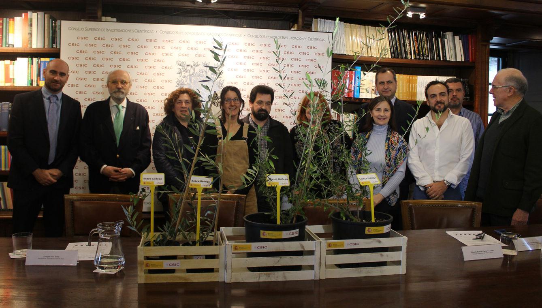 Primeiros pasos para a comercialización de variedades galegas de oliveira