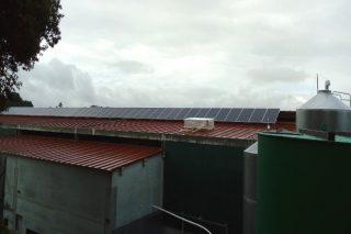 La energía fotovoltaica: Una alternativa de ahorro para el sector agroganadero
