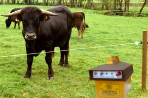 Premio de 3.000 euros ao mellor peche gandeiro electrificado
