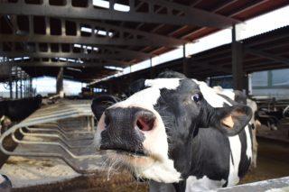 Convocadas as axudas da Xunta para a contratación de seguros agrarios e gandeiros