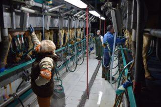 ¿Por que as ganderías de leite teñen dificultades para atopar man de obra?