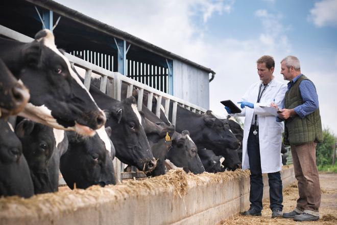 Bayer apoya tres proyectos innovadores para mejorar el bienestar animal en vacuno de leche