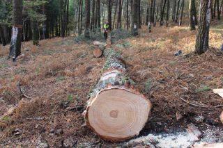 Curso de certificación FSC, mercado de produtos forestais e edificación sustentable