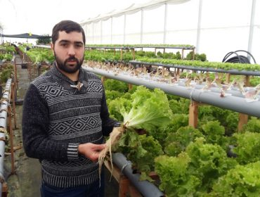 """""""O cultivo en hidropónico de leituga é máis rendible que en terra"""""""