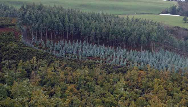 Produtivismo e abandono, as dúas caras da evolución do monte en Galicia