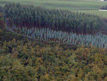 Productivismo y abandono, las dos caras de la evolución del monte en Galicia