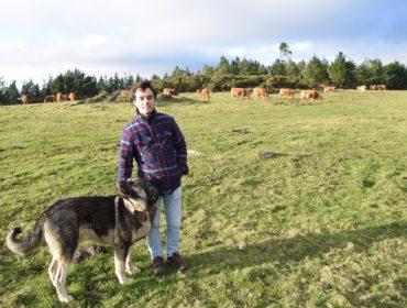 Gandería O Bañal: De 15 a 0 ataques do lobo ao gando grazas aos mastíns