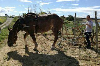 Curso de emprego de tracción animal na horta