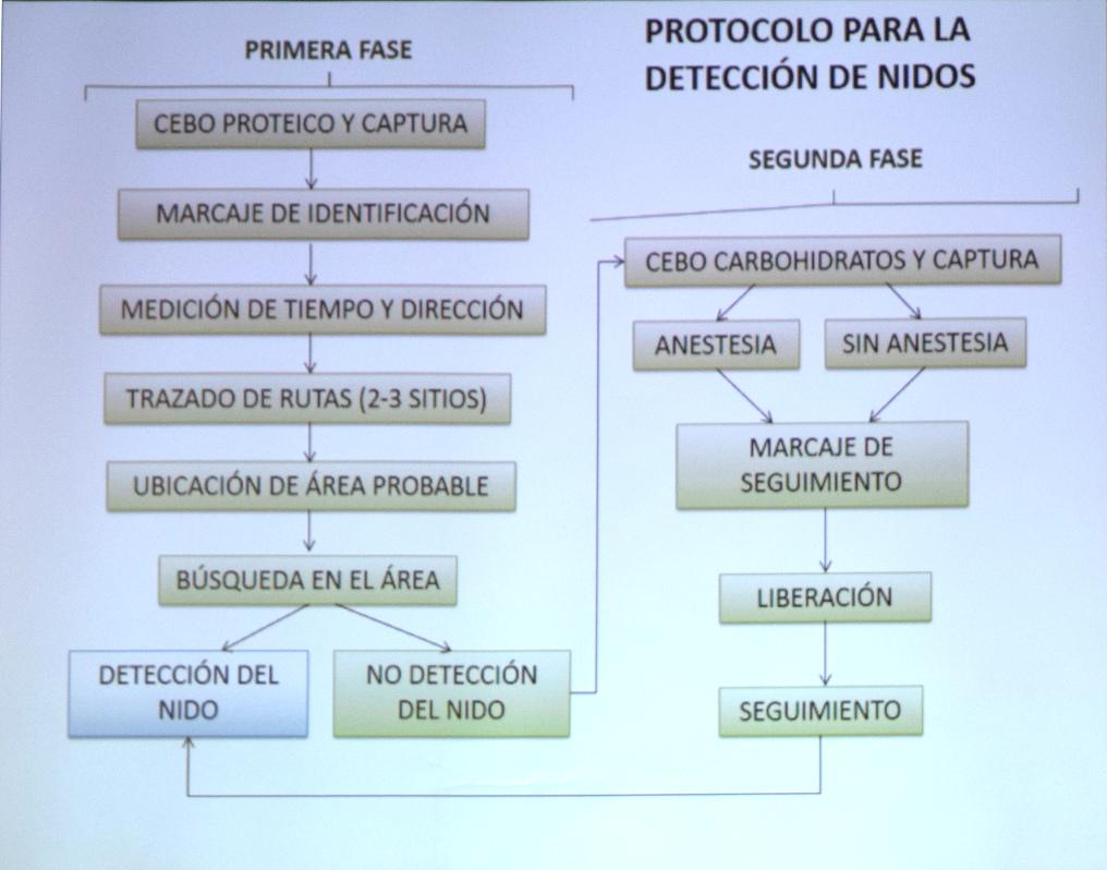 PROTOCOLO_DETECCION_NIÑOS_VELUTINA