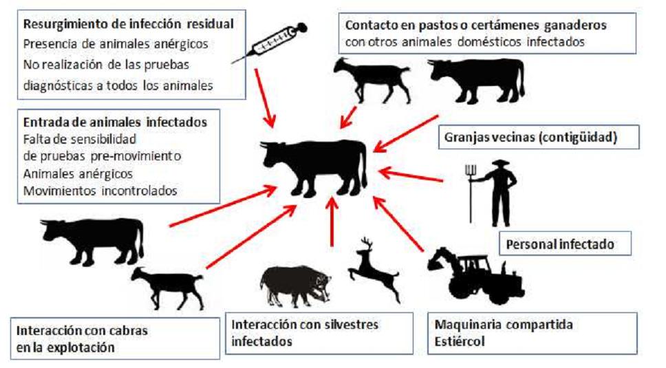(Fonte: CRESA, Fundación Centre de Recerca en Sanitat Animal)