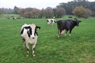 O Sindicato Labrego cuestiona as cláusulas de custes nos contratos do leite