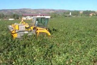 Tapias-Mariñán: una bodega que combina la mecanización tecnológica con el apego a la tierra