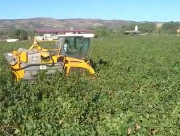 Tapias-Mariñán: unha adega que combina a mecanización tecnolóxica co apego á terra
