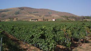 Los viñedos propios se sitúan en las cercanías de la bodega.