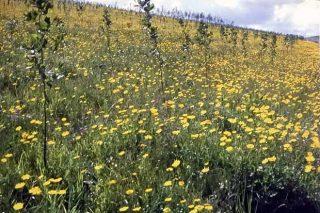 Restauración de solos degradados con abono orgánico, un exemplo de éxito