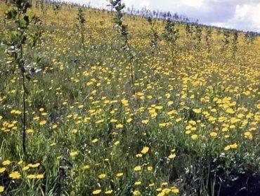 Restauración de suelos degradados con abono orgánico, un ejemplo de éxito