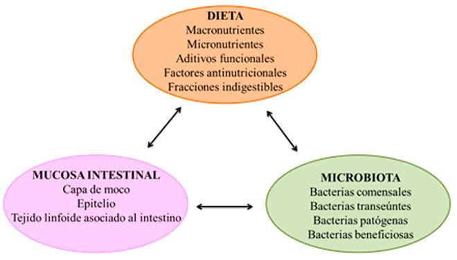 esquema-salud-intestinal-