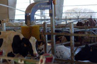 Cepillo rotativo para el bienestar de las vacas.