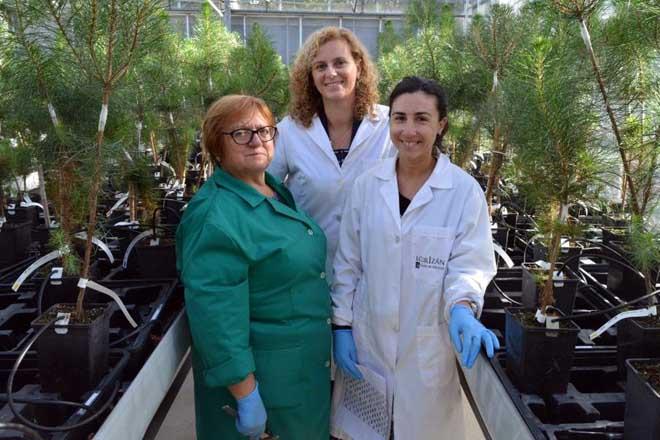 Raquel Diaz, no centro, xunto á investigadora María Menéndez (dereita) e a Maribel, traballadora do viveiro do Centro.