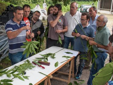 """""""Era preciso un distintivo para a planta ornamental galega, moi demandada en países como Alemania"""""""