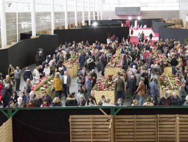 A Deputación de Pontevedra busca promover o cultivo da camelia no monte