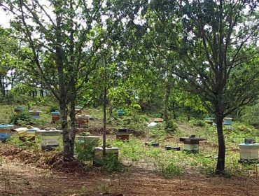 Hibernar colmeas, unha alternativa para enfrontar a velutina e o cambio climático