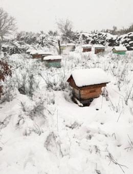 Colmenas de Xurxo en altitud, bajo la nieve invernal.
