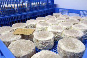 O queixo azul madura de xeito natural coa incorporación na cámara do fungo penicilium