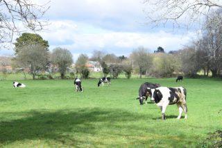 O Parlamento Galego pide reformas para asegurar o futuro do sector lácteo