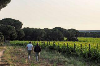 """""""En España cultivamos vide desde hai máis de 4.000 anos e fomos os primeiros en globalizar o viño"""""""