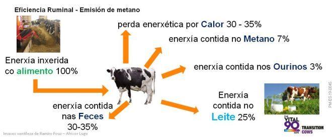 eficiencia na producion de leite
