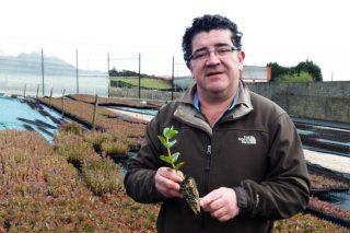 """""""Galicia convertirase nunha potencia en eucalipto nitens, que é a estrela das plantacións forestais"""""""