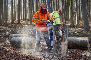 Curso gratuíto en Boqueixón para persoas desempregadas interesadas en traballar na industria forestal