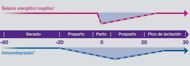 Gráfico de inmunodepresión e balance de enerxía