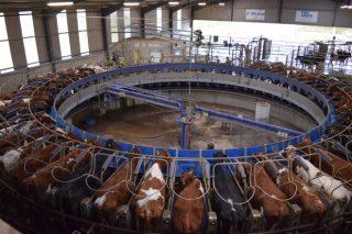Dunne Farm: Unha das maiores granxas de vacún de leite de Irlanda