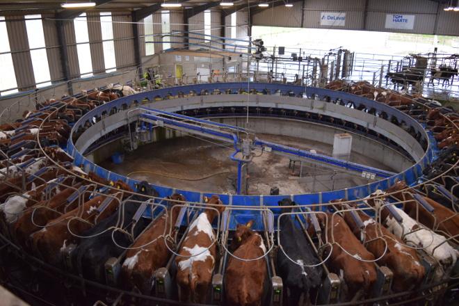 Dunne Farm: Una de las mayores granjas de vacuno de leche de Irlanda