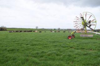 Irlanda: Algunhas claves de por qué é unha potencia internacional no sector lácteo