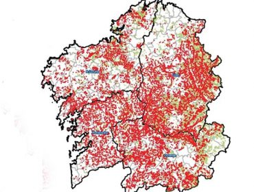A avespiña do castiñeiro consolida a súa expansión a toda Galicia