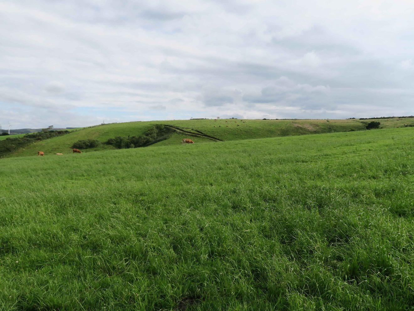 Monte roturado e convertido en pradeira nas Sasdónigas logo da concentración parcelaria