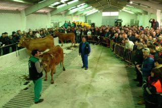 Récord de prezos na poxa de Acruga en Becerreá: Unha media de 2.290 euros por animal
