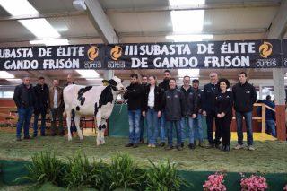 6.000 euros por unha xovenca na Poxa de Elite de Gando Frisón celebrada en Curtis